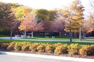 """""""UIC East campus in autumn colors"""" by Hied5 - Own work. Licensed under CC BY-SA 3.0 via Wikimedia Commons"""